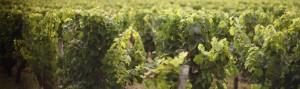 cropped-chateau-bordeaux-vigne-google.jpg