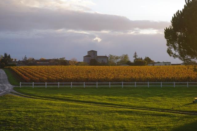 chateau-des-arras-terroir-vigne-automne