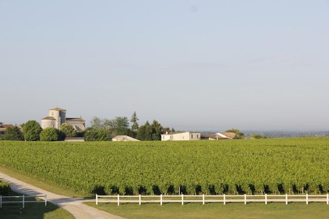 chateau-des-arras-terroir-vigne-ete