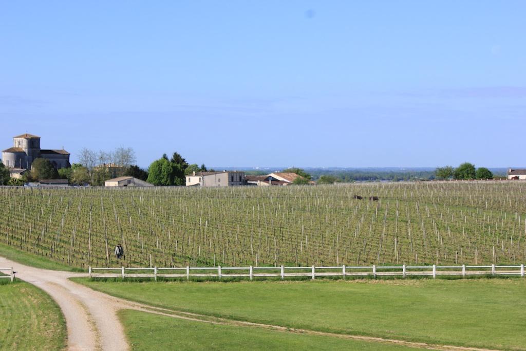 chateau-des-arras-vignes-printemps