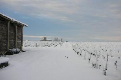 chateau-des-arras-terroir-vigne-hiver