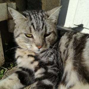 chateau-des-arras-animaux-chat-mildiou